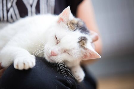 Happy adopted stray cat purring
