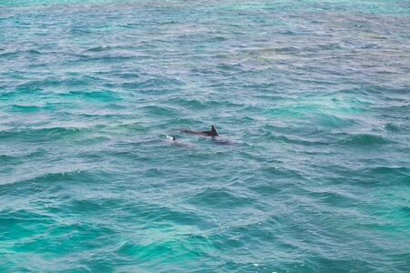 Blue sea water with wild dolphins