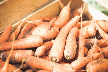 Carrots in a wooden box for winter storage