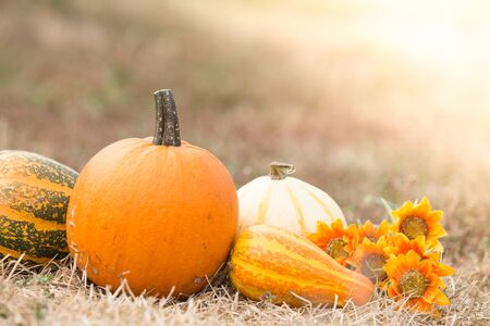 Different types of pumpkins harvest