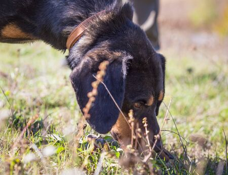 Happy adopted black dog on autumn field Stock Photo