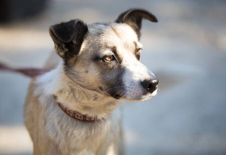 Curious mixbreed happy adopted dog Stock Photo