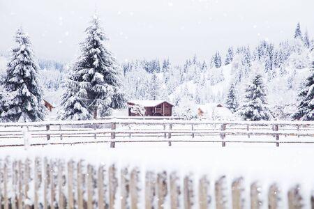 winter snowy fir trees forest
