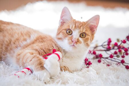 Orange cat playing with Christmas decoration Stock Photo