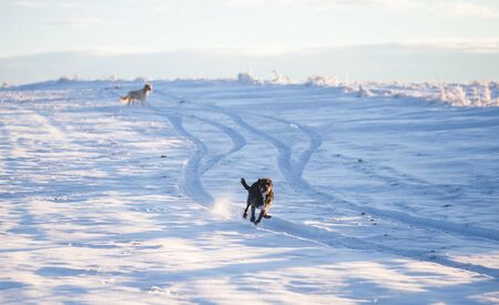 Happy black dog playing in the snow Archivio Fotografico - 137686614