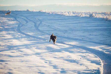 Happy black dog playing in the snow Archivio Fotografico - 137686716