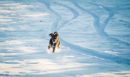 Happy black dog playing in the snow Archivio Fotografico - 137686927
