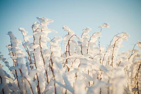 Winter wonderland frozen flowers background Archivio Fotografico - 137371062