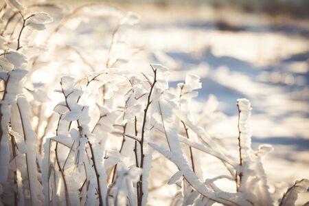 Winter wonderland frozen flowers background Archivio Fotografico - 137370530