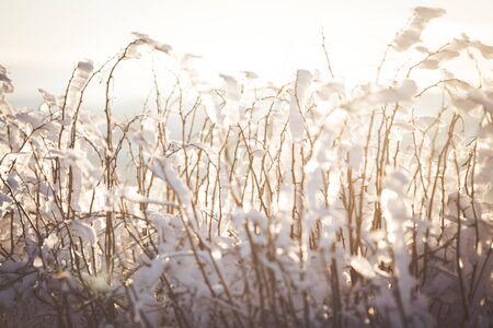 Winter wonderland frozen flowers background Archivio Fotografico - 137370554