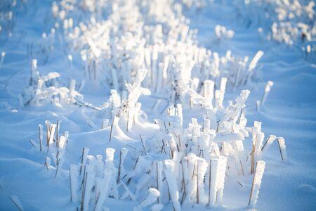 Winter wonderland frozen flowers background Archivio Fotografico - 137370963