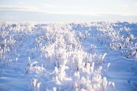 Winter wonderland frozen flowers background Archivio Fotografico - 137370696