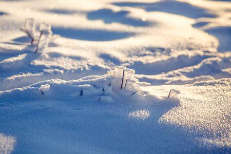 Winter wonderland frozen flowers background Archivio Fotografico - 137370982