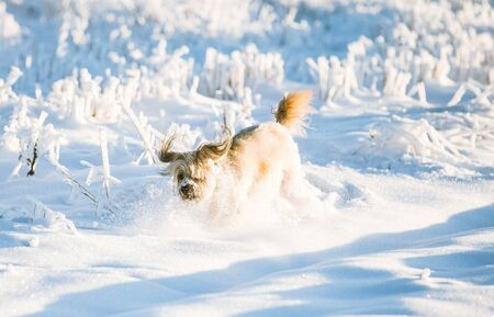 Happy adopted dog playing in the snow Archivio Fotografico - 137602113