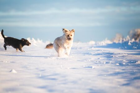Happy adopted dog playing in the snow