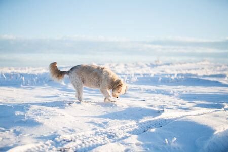 Happy adopted dog playing in the snow Archivio Fotografico - 137601599