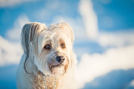 Happy adopted dog playing in the snow Archivio Fotografico - 137602042