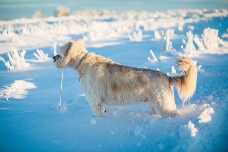 Happy adopted dog playing in the snow Archivio Fotografico - 137701077