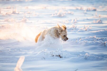 Happy adopted dog playing in the snow Archivio Fotografico - 137701088