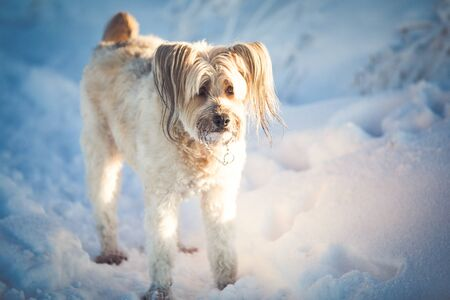 Happy adopted dog playing in the snow Archivio Fotografico - 137602399