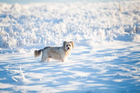 Happy adopted dog playing in the snow Archivio Fotografico - 137602946
