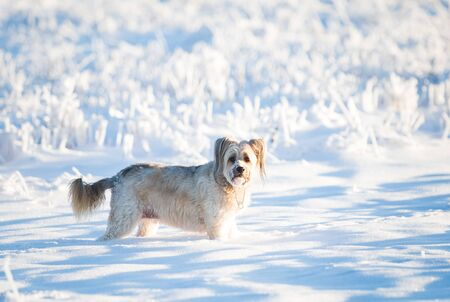 Happy adopted dog playing in the snow Archivio Fotografico - 137602935