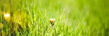 Fresh green grass abstract background Reklamní fotografie