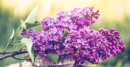 Spring flowers fresh colors easter background Reklamní fotografie
