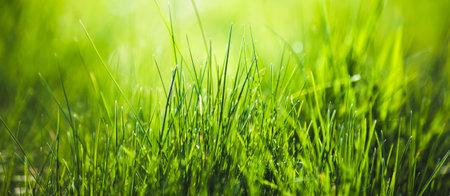 Green grass fresh Easter background