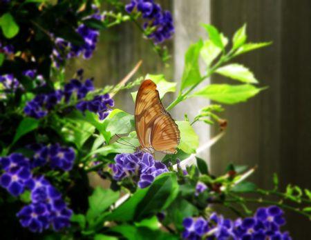 Butterfly on Purple Flowers photo