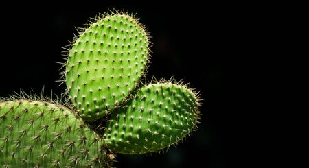 flat and round cactus with black background