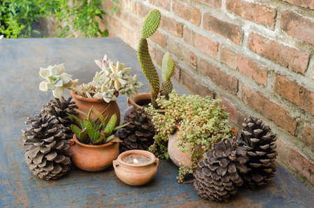 Outdoor rustic christmas ornaments. Cactus and succulents with pine cones and a candle on terracotta flower pots.