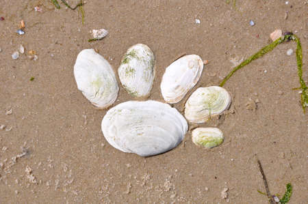 soggy: seashells maked as footstep on the soggy sand