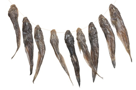 bullhead fish: bunch of dried fish isolated on white