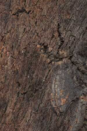 cortical: surface texture of tree bark as background Stock Photo