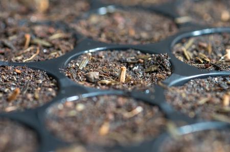 nurseries: A bunch of baby plants growing inside of pots inside of a greenhouse nursery.