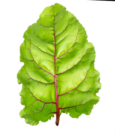 Beet leaves. Beetroot leaves, fresh beet leaf isolated on white background.