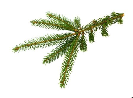 Fir tree branch isolated on white background. Pine branch. Christmas fir. 写真素材 - 129460388