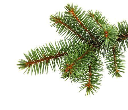 Tannenbaumzweig lokalisiert auf weißem Hintergrund. Kiefer Zweig. Weihnachtsdekoration. Standard-Bild