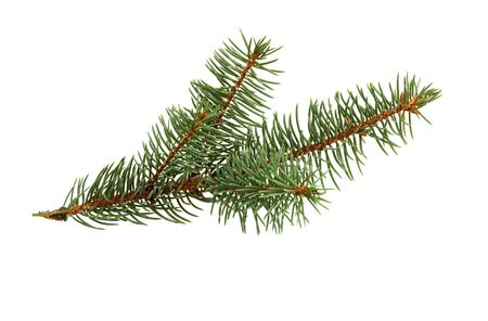 Fir tree branch isolated on white background. Pine branch. Christmas decoration.