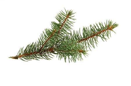 Tannenbaumzweig lokalisiert auf weißem Hintergrund. Kiefer Zweig. Weihnachtsdekoration.