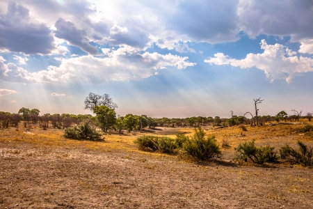 Landscape of Botswana, South Africa