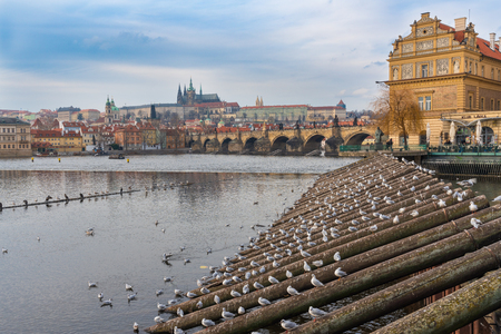 Prague, Czech republic. View of Vltava river, old town and herring gulls on the wooden pols at late afternoon at Winter time.