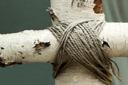 Closeup of birch sticks. Connected birch trunks.