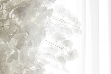 Beautiful white leaves against the tulle curtains. Background.