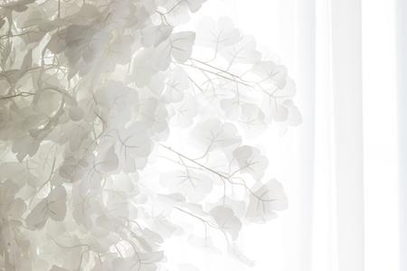 Schöne weiße Blätter gegen die Tüllvorhänge. Hintergrund. Standard-Bild