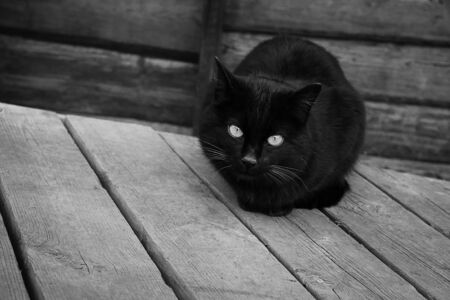 At the door of the old house sitting black cat at the closed door. The old porch in black and white picture.