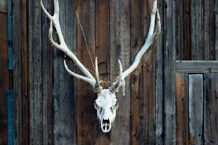 evil elegant skull of a deer with a garland for Halloween on wooden background