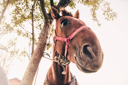 Funny portrait of a red horse beside the tree