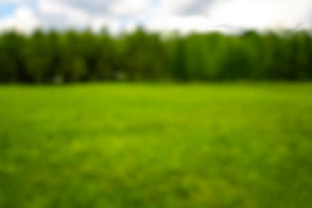Blurred landscape of green lawn and forest background. Banco de Imagens